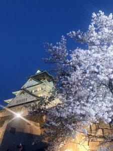 夜桜を見て